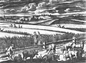 farmer 1700 001